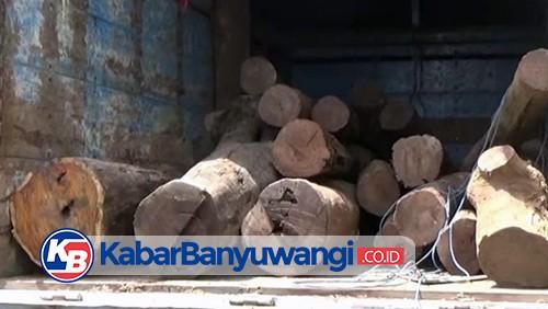 Polisi Amankan Truk Muat Kayu Diduga Hasil Pembalakan Liar di Kawasan Hutan Alas Purwo