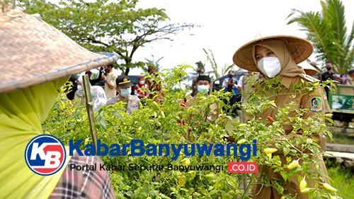 Banyuwangi Ditunjuk Sebagai Daerah Penyangga Cabai Rawit Nasional