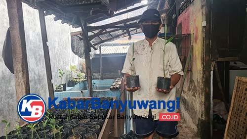 Melihat Kampung Jahe di Banyuwangi Manfaatkan Lahan Sempit