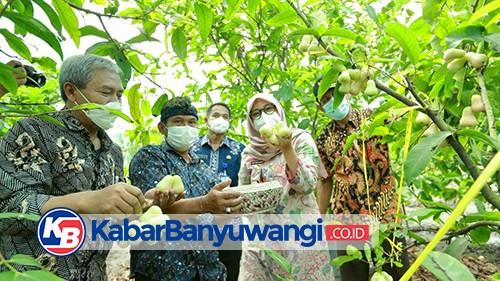 Menengok Kampung Jambu di Desa Karangdoro, Banyuwangi